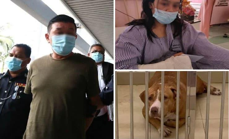 Pemilik Anjing Pitbull Cederakan Wanita Di Melaka Didenda Rm2000 Buzzkini